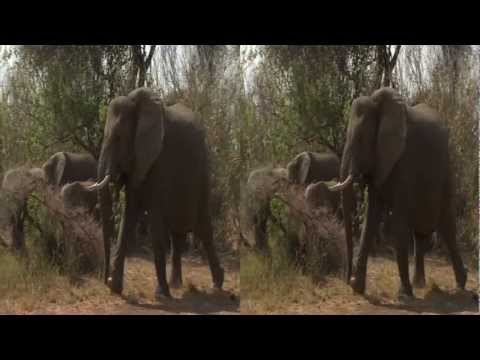 3net African Wild Open 3D Video