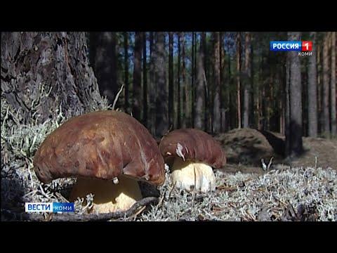 В Коми попасть в Чернамский заказник за грибами теперь можно только по электронным пропускам