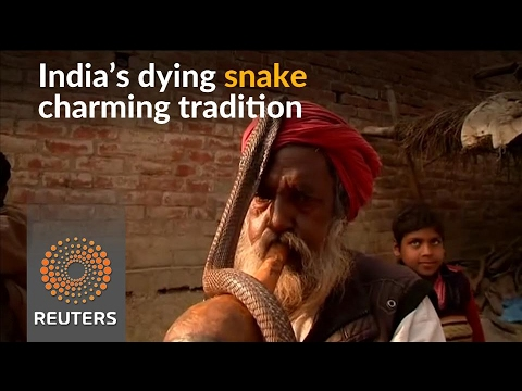 India's snake charmers struggle to keep tradition alive