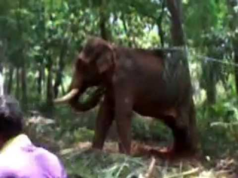 Kerala elephant attack youtube - photo#41