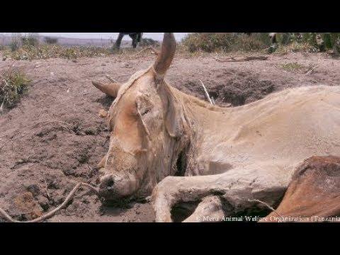 Extreme Dürre in Tansania: Die Tiere brauchen uns jetzt dringend!