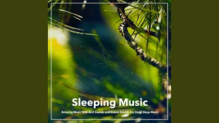 Forest Music For Sleep