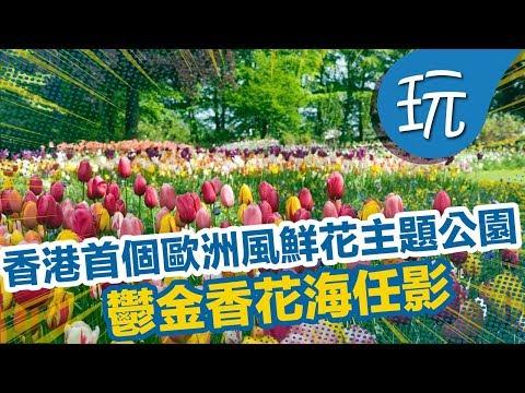 【香港假日好去處】香港首個歐洲風格鮮花主題公園!鬱金香花海任影