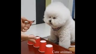 Smarty Dogs | Funny Dog Video Compilation 2019 - Intelligent dogs videos YouTube