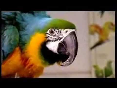 Veliki papagaji