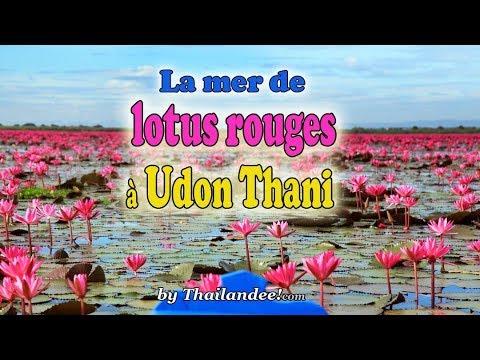 le lac aux lotus rouges d'udon thani