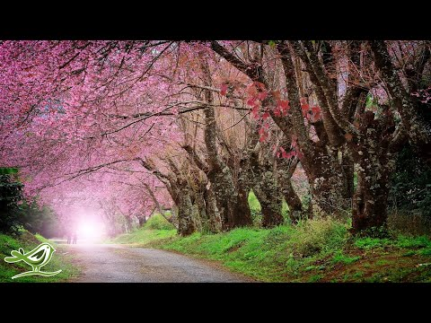 9 Hours of Relaxing Piano Music: Sleep Music, Beautiful Relaxing Music, Meditation Music ★92