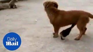 Ovaj mali psić je samo mirno stajao na cesti, a onda mu je prišla patka i uradila NAJLUĐU STVAR!