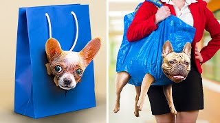 15 Ways to Sneak Animals to College/ Funny Pet Pranks and Hacks