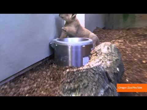 Baixar 2013 in Review: Best Viral Animal Videos