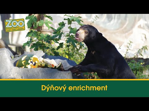 Dýňový enrichment