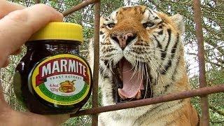 Do Tigers Like MARMITE?