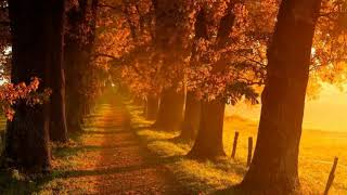 Mozart - Classical Music for Relaxation#22