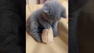 Funny Animals Dogs Cat pets FUNNY ANIMALS