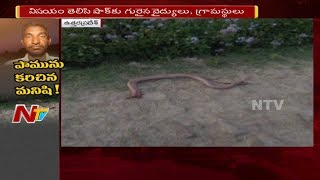 Man chases snake and kills it by biting with vengeance..