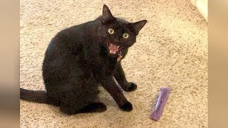 Prepare yourself for this TRY NOT TO LAUGH challenge, it's NOT EASY AT ALL! - Funniest ANIMAL VIDEOS