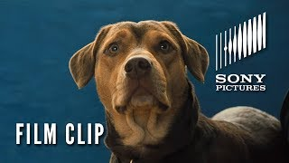"""A DOG'S WAY HOME Clip - """"New Friends"""" (In Theaters Thursday)"""