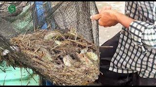 Kéo lưới bắt cá | Thấy mà ham | Fishing | Sắc Màu VN