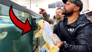 MILLION to 1 Exotic Fish FOR SALE at FISH AUCTION! *RARE*