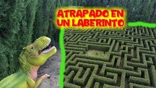 Dinosaurio Andrés T-Rex 24 horas atrapado en un laberinto | Vídeos de dinosaurios para niños