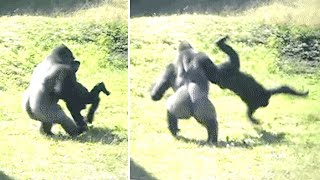 The Giant Lion Eating Chimps Of The Magic Forest Just Revealed This To Scientists In The Region