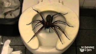 All Comments On Giant Spider Lives Under My Toilet In