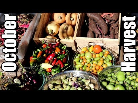 Big October Vegetable Garden Harvest (2018): Local Food At Its Best!