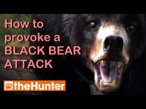 Baixar Provoking a Bear Attack - theHunter PC Game