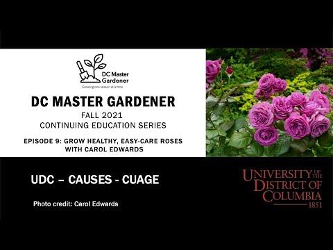 DC Master Gardener - Summer 2021 CE SeriesEpisode 9 – Grow Healthy, Easy-Care Roses