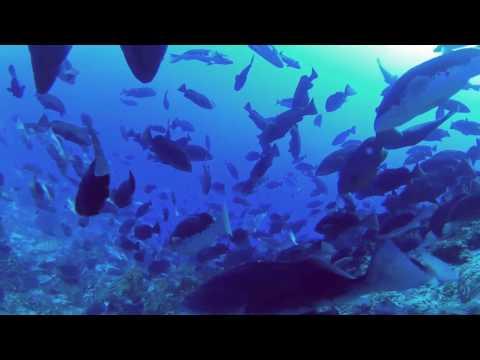 360 VR Nassau Grouper Spawning Aggregation - Little Cayman