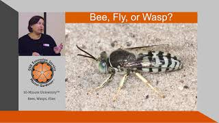 How to Tell the Difference Between Bees, Wasps, & Flies