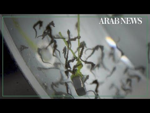 UGC: Male seahorse gives birth in Sydney Aquarium