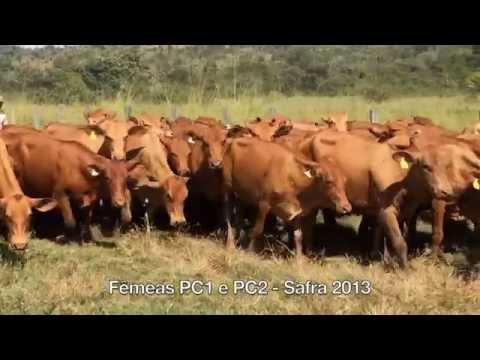 Fêmeas e Machos PC1 e PC2 - Saf...