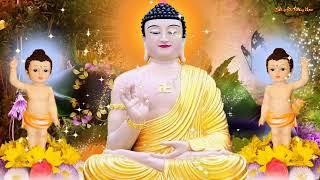 Đêm Trằn Trọc Khó Ngủ Nghe Kinh Phật Này Tâm An Dễ Ngủ Gia Đạo Bình An