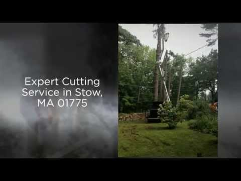 Tree Removal & Pruning Service 01775