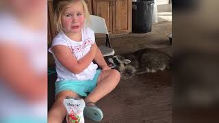 TRY NOT to LAUGH Animals FUNNY PET FAILS Compilation (Funny&Cute)