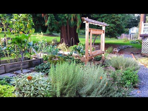 Pruning Perennial Herbs- Rosemary, Sage, Oregano, Lavender