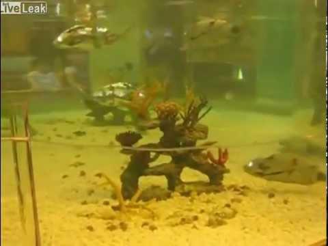 Acquario pieno di pesci meccanici ROBOFISH