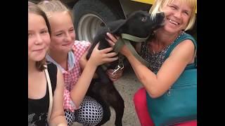 Волонтеры помогли собаке