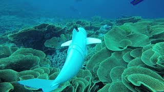 A Robotic Fish Swims in the Ocean