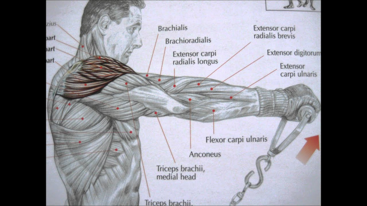 Delaviers Core Training Anatomy Pdf