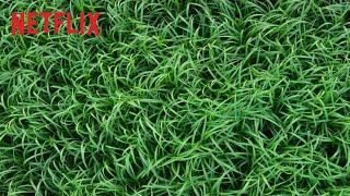 Dans les hautes herbes :  bande-annonce VOST