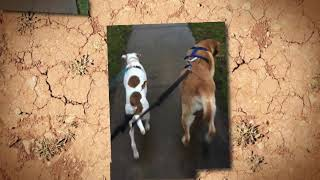 February 22 is National Walk the Dog Day!