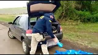 PRF prende traficante com mais de 100 quilos de maconha na BR-386, em Santo Antônio do Planalto