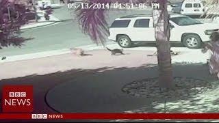חתול מציל ילד מכלב