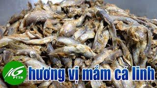 Hương vị mắm cá linh | THKG