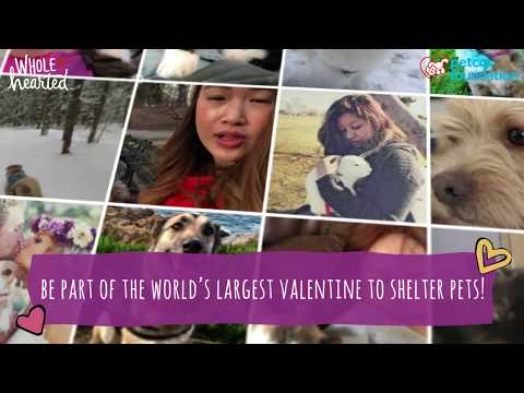 The love of adopted pets changes everything! Help us celebrate that love by creating the World's Largest Virtual Valentine to shelter pets and the people who care for them. Submit your valentine photo or video message. On Valentine's Day, we'll deliver your message of love to more than 4,000 animal welfare organizations across the country!