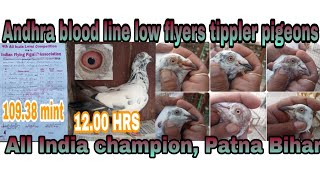 All India champion in low flyers White eyes tippler pigeons Mr. Pankaj Patna Bihar by Kamal Arora