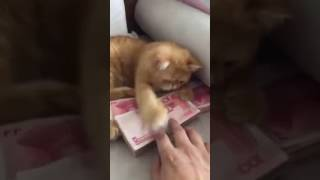 Funny cat not giving money