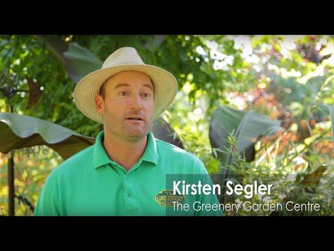 Testimonial: The Greenery Garden Centre